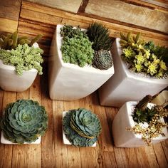 Apartment Garden Ideas small plants apartment patio garden ideas Garden Idea For Porches Decks A Balcony Indoor Spaces Or Small Apartments