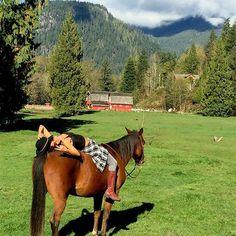 Drop the reins, ditch the saddle & trust. #countrygirls #OhCanada #horsecentstackandexchange