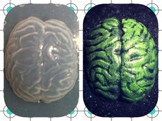 Resin Zombie Brain Plastic Mold For Necklace by KAPCREATIONS, $4.50