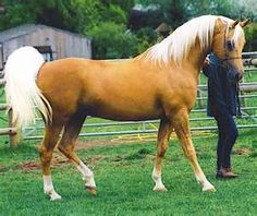 Post the most beautiful horse in the world!