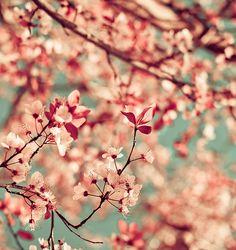 jadore les fleurs pour une décoration asiatique chambre tendance