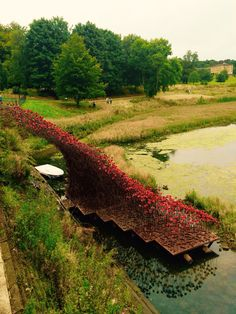 The start of the Poppies at Yorkshire Sculpture Park -photo Jo-anne Foxcroft