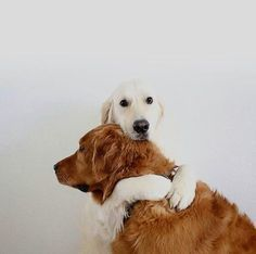 Dogs having a cuddle