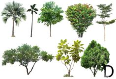 02- 20 Tree Png Images for architecture, landscape, interior renderings dzzyn