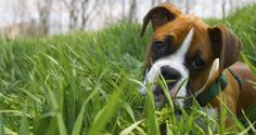 30 Most Loyal Dog Breeds   We Luv Puppies   Page 14
