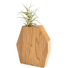 Boyce Studio Geometric Wood Air Plant Holder ($32) ❤ liked on Polyvore featuring home, home decor, wooden planters, geometric home decor, wooden home decor, wood planter and inspirational home decor
