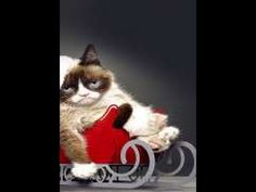 Watch Grumpy Cat's Worst Christmas Ever    Watch Movies Online Free