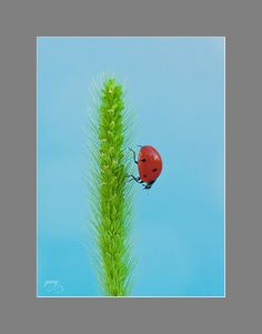 "500px / Photo ""Ladybug"" by Bảo Trần"