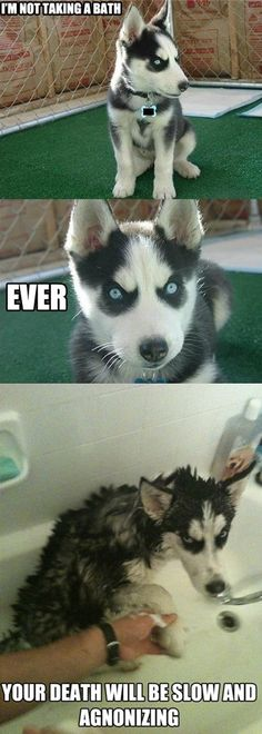 @Debra Patterson this is why curtis shouldn't get a husky! haha