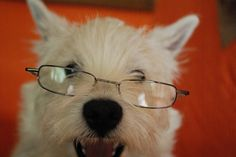 cute dog in glasses