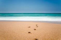 Footprints Footprints, Fine Art Prints, Beach, Water, Outdoor, Gripe Water, Outdoors, The Beach, Art Prints