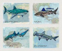"""Shark Art Prints for Kids ((B) Set of Four, 8""""x10"""") Little Pig Studios http://www.amazon.com/dp/B00HTCBIEO/ref=cm_sw_r_pi_dp_ftjTtb0C6JB3S42Z"""
