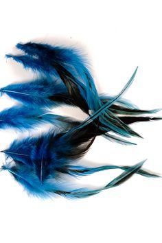 Coq flammé - 10-15 cm - bleu - Plumes.fr