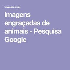 imagens engraçadas de animais - Pesquisa Google