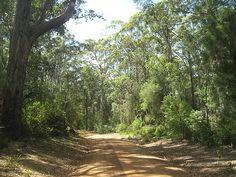 forest gravel roads, Denmark Western Australia