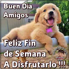 Fin de Semana imagen #10138 - Buen Día Amigos Feliz Fin de Semana ¡A Disfrutarlo ! Tags: Bonito, Cachorro, Felicidad, Perrito. Spanish Quotes, Me Quotes, Memes, Instagram, Nice, Dogs, Animals, Bellamy, Love
