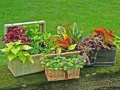 valise, boîte et panier tressé servent de jardinières originales