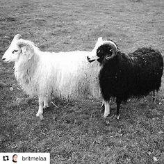 Sort og hvitt. #reiseblogger #reiseliv #reisetips  #Repost @britmelaa with @repostapp  #sheep #blackandwhite #nature #nature_seekers #naturelovers #photooftheday #throwback #sandnes  #rogaland #norway #norge #interiørmagasinet #weekend #worldphotographyart #pocket_norway