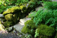 Old Germantown Gardens' mossy steps