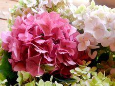 My Garden Flowers - Bluebird Farm