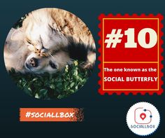 The one known to be the social butterfly.  10 types of friends you find in every group. www.sociallbox.com