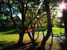 Nature Outdoor Furniture, Outdoor Decor, To Go, Park, Places, Nature, Beautiful, Home Decor, Homemade Home Decor