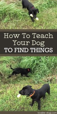 How To Teach Your Dog To Find Things via @KaufmannsPuppy #puppytrainingtips
