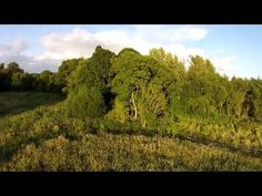Familie/Drone (Horses on the meadow) - YouTube