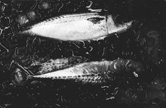 Tsukiji fish market. My trip to Tokyo 2012