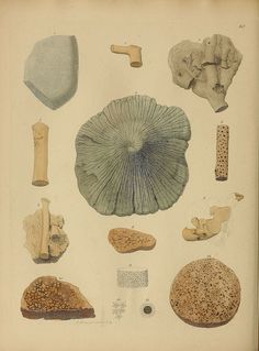 [][][] A pictorial atlas of fossil remains London :H.G. Bohn,1850.