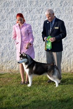 Black & white Siberian Husky male, Joker, winning Best of Breed and Group 3.