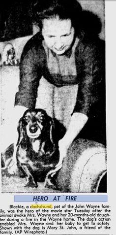 Mrs.John Wayne and their Hero Dachshund