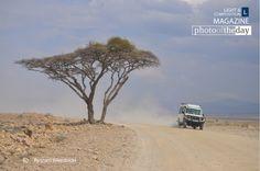 Safari, by Ryszard Wierzbicki