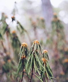 Kesällä kukkinut suopursu komeili kohmeisena avosuon laidalla. Metsässä kävellessä ehtii hyvin ihailla ja kuvailla kasveja.  #suomi100 #luonto #metsä #forest #retki #ulkoilu #suomiretki #ourfinland #suomi100 #suopursu