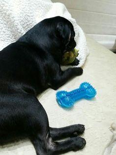 Nossa bebezinha está dodoi!  #tadinha! 🌟❤😓😓💜💙🐞