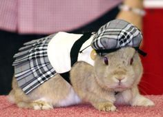 rabbit fashion week in Japan...Oh my goodness @Abby Beavin this is a thing.