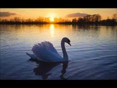 Jean Sibelius - Le Cygne de Tuonela / The Swan of Tuonela - YouTube