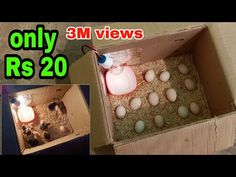 कम किंमत मे इन्क्यूबेटर | बिना मुर्गी के चूजे निकालो - YouTube Poultry Management, Homemade Incubator, Chicken Rearing, Chicken Barn, Light Bulb Crafts, Chicken Feeders, Building A Chicken Coop, Stamping Tools, Chicken Breeds