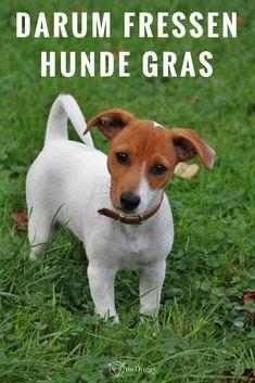 #Hund || #Hunde || Gras fressen || Tipps || Ideen || Bilder