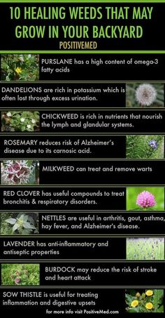 Remedies Natural 10 healing weeds that may grow in your backyard - People often kill weeds in their lawn and garden with toxic herbicides that are bad for the environment. Some weeds are actually healing weeds. Healing Herbs, Medicinal Plants, Natural Healing, Poisonous Plants, Natural Medicine, Herbal Medicine, Herbal Remedies, Natural Remedies, Natural Treatments