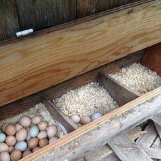 Chicken bedding for nesting boxes Chicken Laying Boxes, Chicken Boxes, Chicken Nesting Boxes, Chicken Pen, Nesting Boxes For Chickens, Backyard Chicken Coops, Chicken Coop Plans, Building A Chicken Coop, Diy Chicken Coop