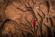 Roots Birth by Julien Orre - Photo 139694017 - 500px