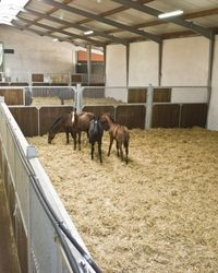 """""""The loose stable for young horses in winter"""" I want this instead of stalling on a regular basis. Would prevent stocking up without leaving outside 24/7"""