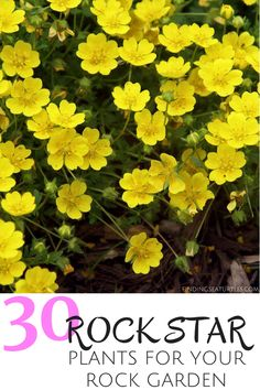30 Rock Star Plants for your Rock Garden soil is not ideal with a rocky landscape? If you have a rocky landscape that is a challenge to grow plants in, consider planting rock garden perennials. Rock Garden Plants, Garden Stones, Gravel Garden, Landscaping With Rocks, Yard Landscaping, Landscaping Ideas, Ground Cover Plants, Flower Landscape, Container Gardening