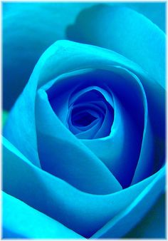 The blue rose by Suzanne takes you down, via Flickr    {So freakin' beautiful! ah!}
