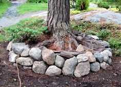 rocks around a tree as border. Would like to fill with wood chips too.