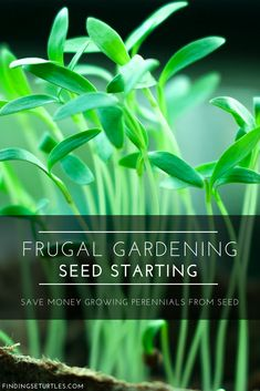 Frugal Gardening: Grow Perennials From Seeds #frugalgardening #gardeninghacks #seeds #gardening #perennials