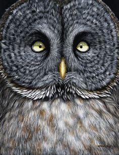 Edward Spera Gallery / Great Grey Owl