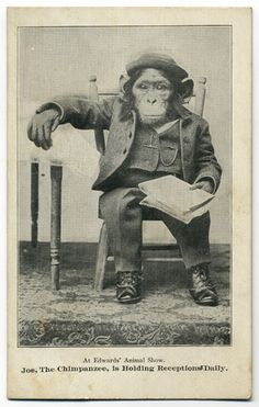 Joe the Chimpanzee Is Holding Receptions Daily. Via Alan Mays on flickr