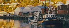 Lyttelton Harbor Christchurch, N. Bays, New Zealand, Lost, Photography, Photograph, Berries, Fotografie, Photoshoot, Fotografia